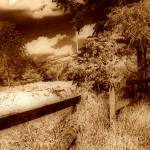 """the old fence line sepia A"" by shackman3"