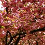 """Spring In New York"" by LRobinsonIII"