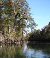 Chipola River Fall 017