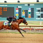 """Grand Prairie Lone Star Horse Races"" by tnjphoto"
