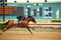 Grand Prairie Lone Star Horse Races