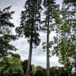 """Charlton Park arboretum"" by shortwork"