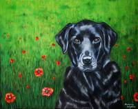 poppy_labrador_portrait_0009RC