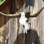 """A True Texas Barn"" by annjaber74"