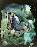 digital art print butterfly