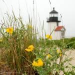 """Brandt Point Lighthouse"" by stevegarfield"