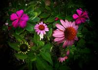 Coneflower and friends