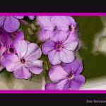 """""""Purple Poster"""" by soapmaker"""
