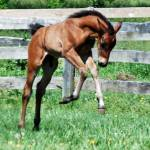 """""""Andalusian colt - Don Diego CCA - 3 days old"""" by Mysticphotos"""