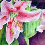 """Asiatic Lilies"" by sheryllcollins"