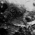 """""""Oak Grove Nature Center"""" by rachellynne"""