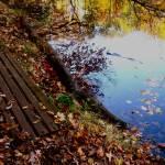 """""""Fall Leaves"""" by rachellynne"""
