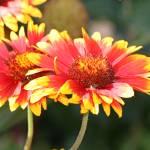 """Garden Flowers"" by DRW"