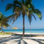 """cayo levisa 3 palm tree"" by photos"