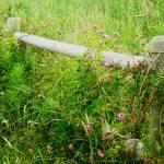 """""""Forgotten Fence"""" by rachellynne"""