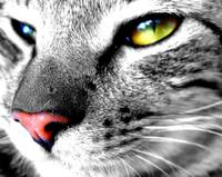 Cat Selective Color