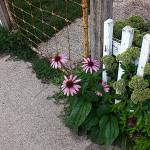 """Rusty gate, purple coneflowers & picket fence"" by evoken"