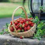 """STAWBERRIES IN A BASKET"" by Mysticphotos"