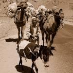 """Kuchi Nomad Caravan, Afghanistan"" by DezineZone"