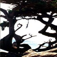 Abstract Tree At Monterey Art Prints & Posters by Robert Estes