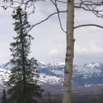 """Alaska Pine Mountain"" by eagleswings"