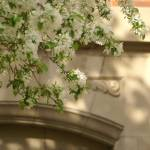 """""""Blossoms at Lincoln Center"""" by 2dogstudio"""