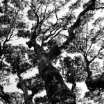 """Treetops"" by MissSarah"