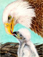 Baby Eagle-1