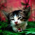 """serenity cat"" by notsogoodphotography"