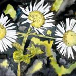 """heath aster wildflower watercolor painting print"" by derekmccrea"