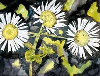 heath aster wildflower watercolor painting print