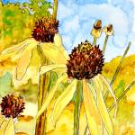 """yellow coneflower watercolor painting print"" by derekmccrea"