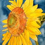 """sunflower macro flower watercolor painting print"" by derekmccrea"