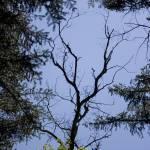 """""""A Break in the Woods"""" by Keppyslinger"""