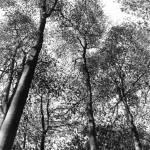 """""""Birches"""" by baabz"""