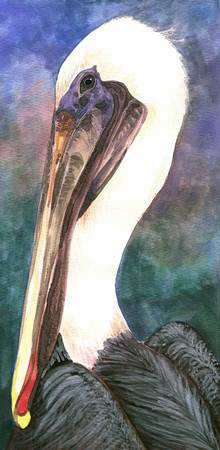 Beautiful Brown Pelican