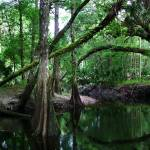 """econ2 tree copy"" by robertwalkerphotography"
