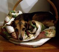 Bailey in a basket