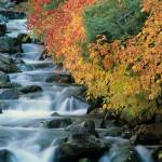 """Millcreek Autumn"" by wildlifephotography"