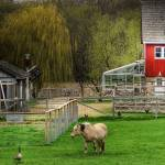 """Barnyard - West Saint Paul, MN, USA"" by drladd"