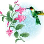 """HUMMING BIRD FUCHSIA"" by mbrush3969"