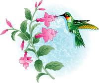 HUMMING BIRD FUCHSIA