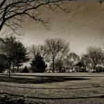 """Village Common Treescape.."" by JoanneCoyle"
