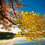 """Walden Autumn Color No Border"" by kronoskid"