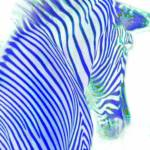 """Blue Zebra"" by walbyent"