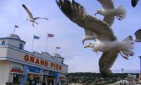 Weston Super Mare Pier....Hitchcock style...