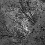 """""""Creek Perspective"""" by evegieser"""