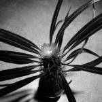 """Cactus Stretch"" by evegieser"