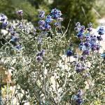 """""""Desert Flowers"""" by bill_white"""