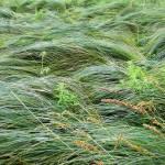 """Grasswaves"" by evoken"